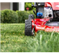Feed Your Lawn